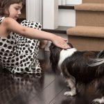 Photo of a small dog on hardwood floors